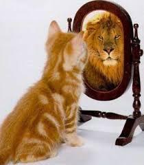 leeuw in spiegel